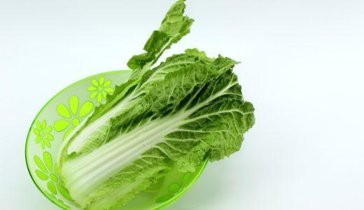 白菜の家庭菜園の育て方!初心者でも簡単に実践できる栽培方法